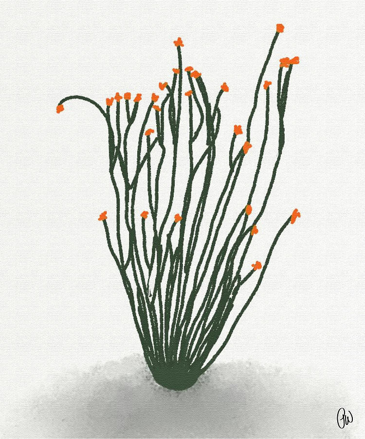 ocotillo drawing by priscilla wolfe