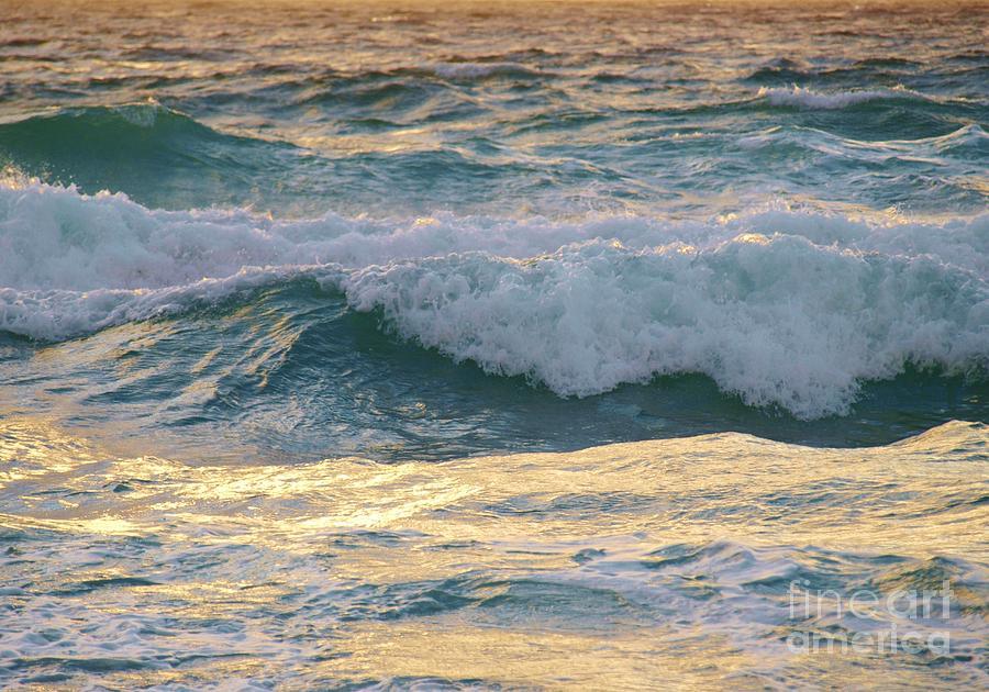 Alga Pyrography - Oh  Majestic Ocean by E Luiza Picciano