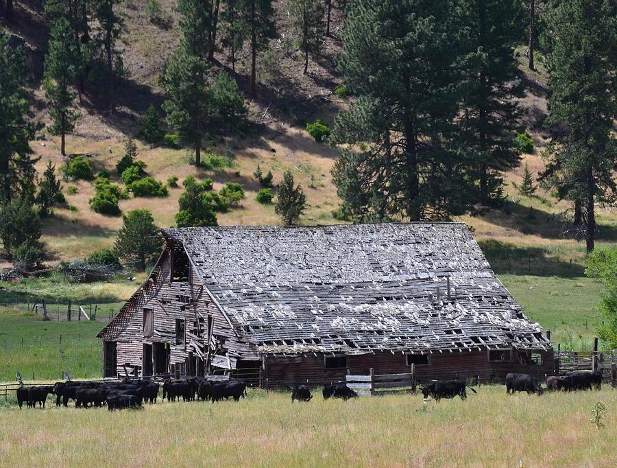 Old Photograph - Old Barn by Linda Larson