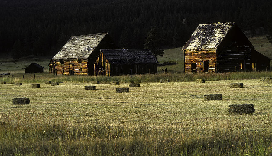 Montana Photograph - Old Homestead-potomac Montana by Thomas Schoeller