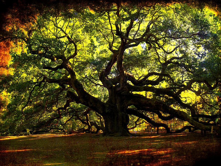 Angel Oak Photograph - Old Old Angel Oak In Charleston by Susanne Van Hulst