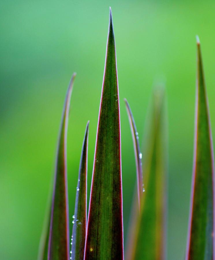 Plant Photograph - On Guard by Melanie Moraga