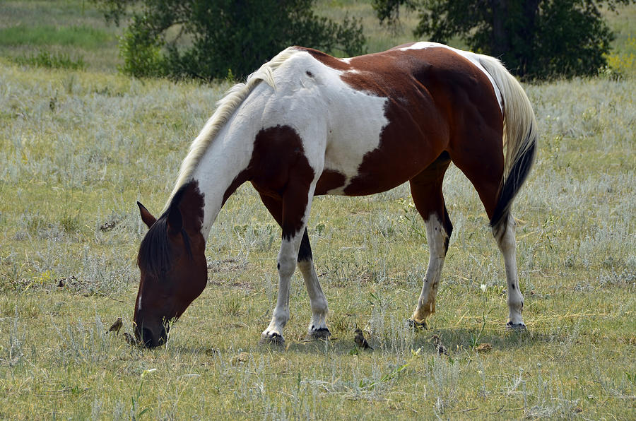 Horses Photograph - Opposites In Harmony by Ken Smith