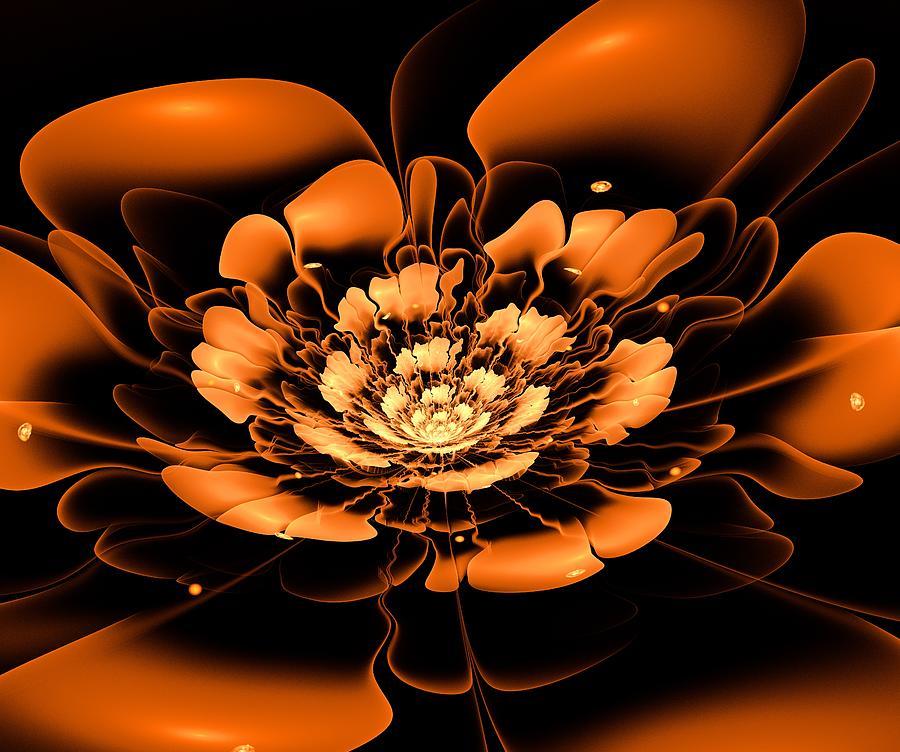 Flower Digital Art - Orange Flower  by Anastasiya Malakhova