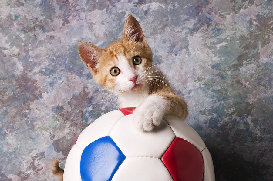 Kitten Photograph - Orange Tabby Kitten With Soccer Ball by Garry Gay