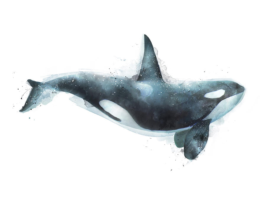 Anatomy Of A Blue Whale