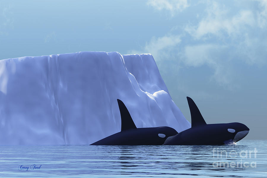 Killer Whale Painting - Orca by Corey Ford