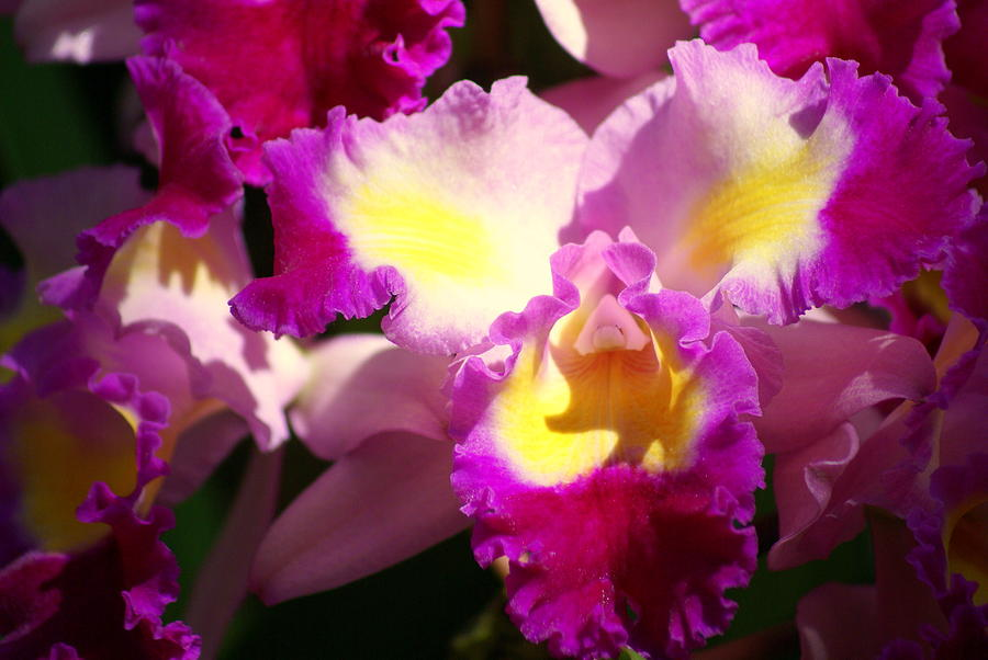 Flower Photograph - Orchid 1 by Marty Koch
