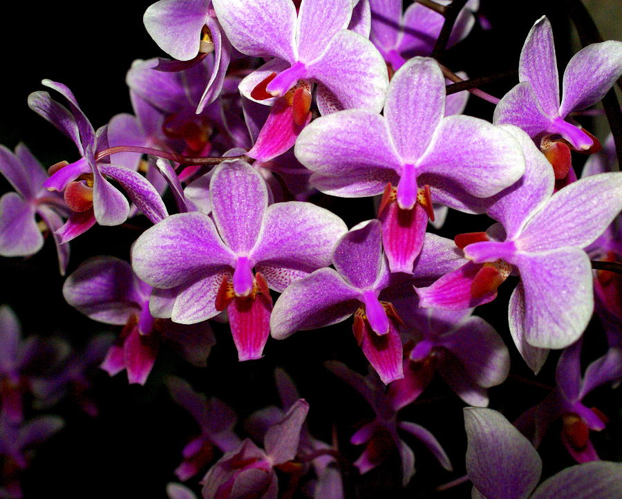 Flower Photograph - Orchid 12 by Marty Koch
