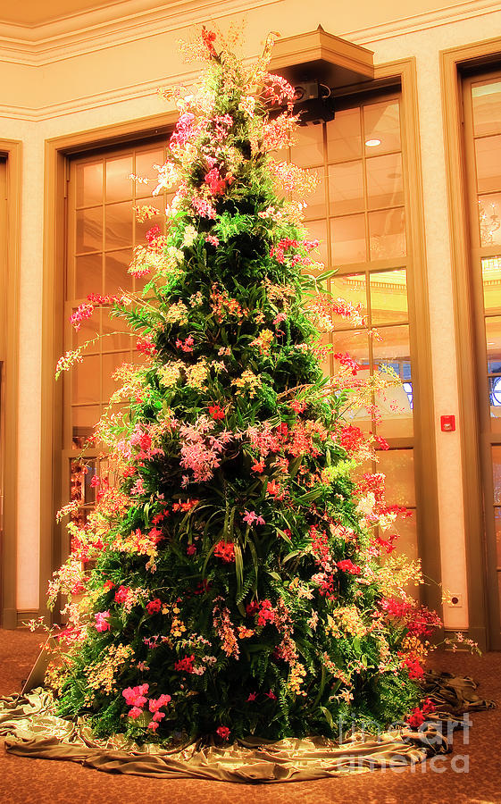 Orchid Christmas Tree Photograph