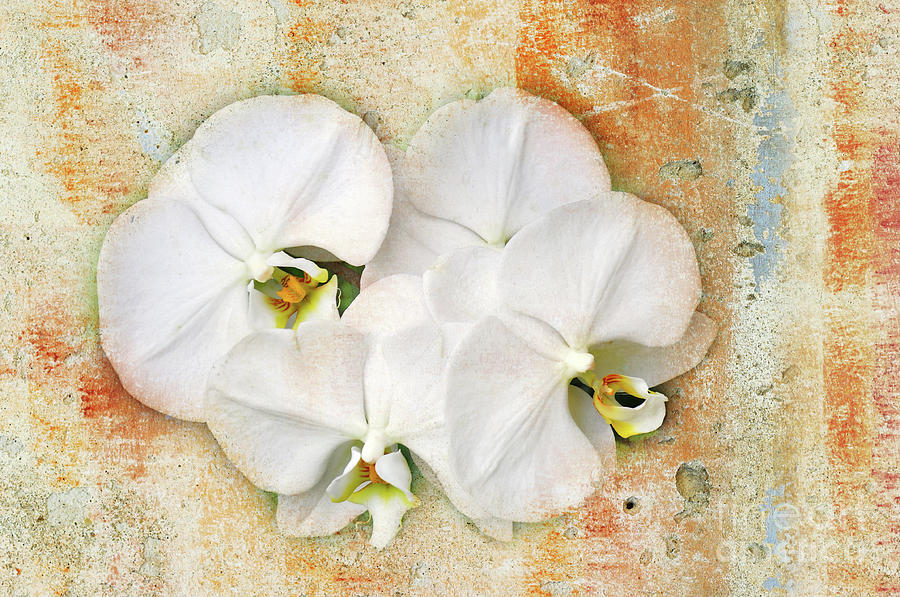 Orchids Photograph - Orchids Upon The Rough by Andee Design