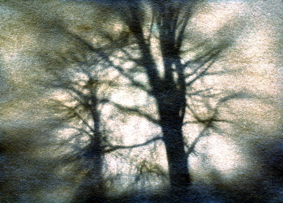 Trres Photograph - Original Tree by Diana Ludwig