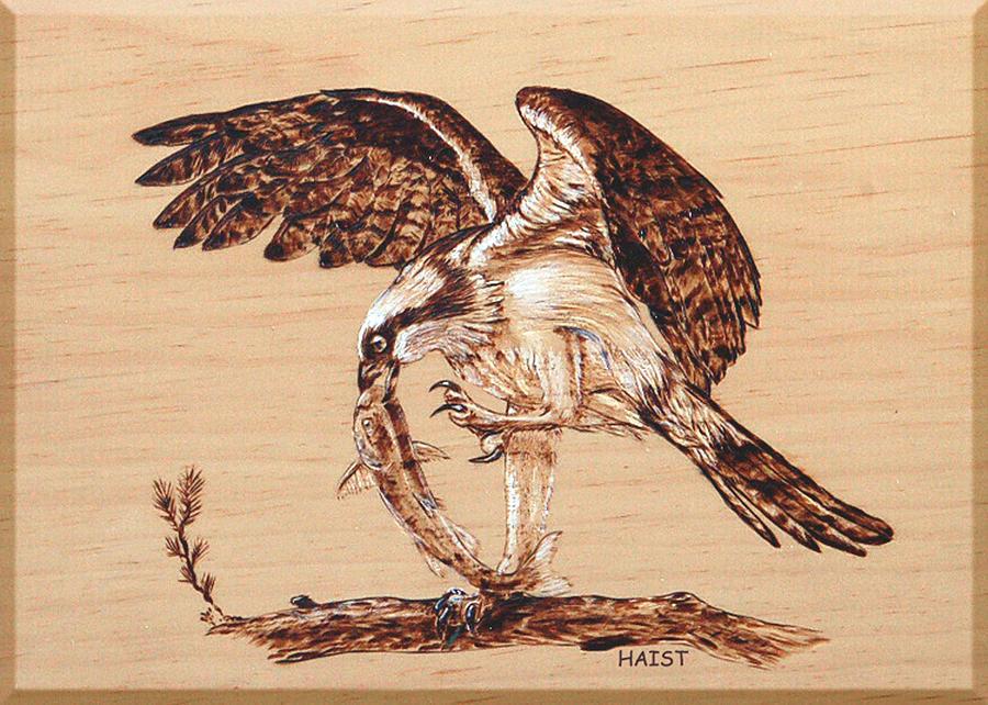 Osprey Pyrography - Osprey 3 by Ron Haist