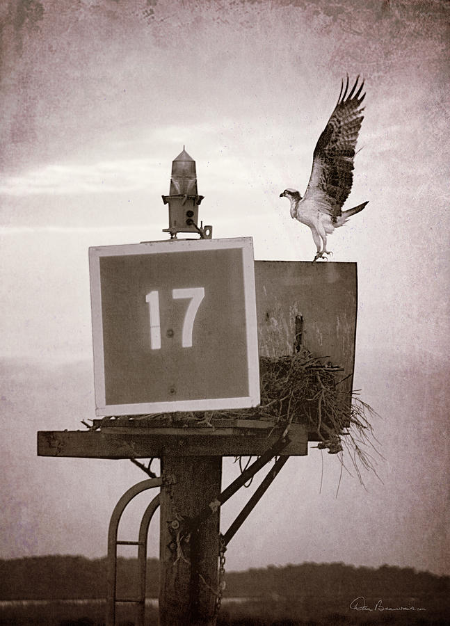 Osprey Landing On Channel Marker 17 Photograph