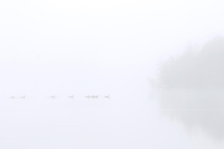 Out Of The Fog Photograph