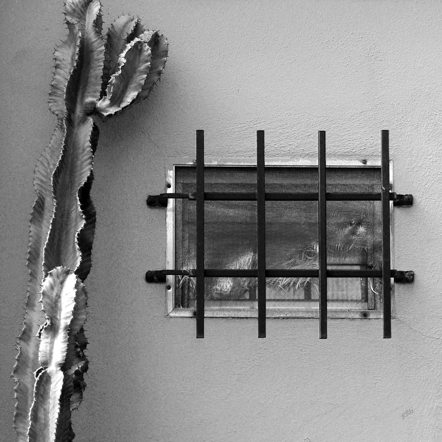 Black And White Photograph - Outsiders - Cactus By The Window by Ben and Raisa Gertsberg