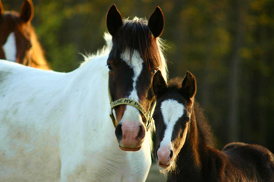 Horses Photograph - Paint And Pinto by Emily Stauring