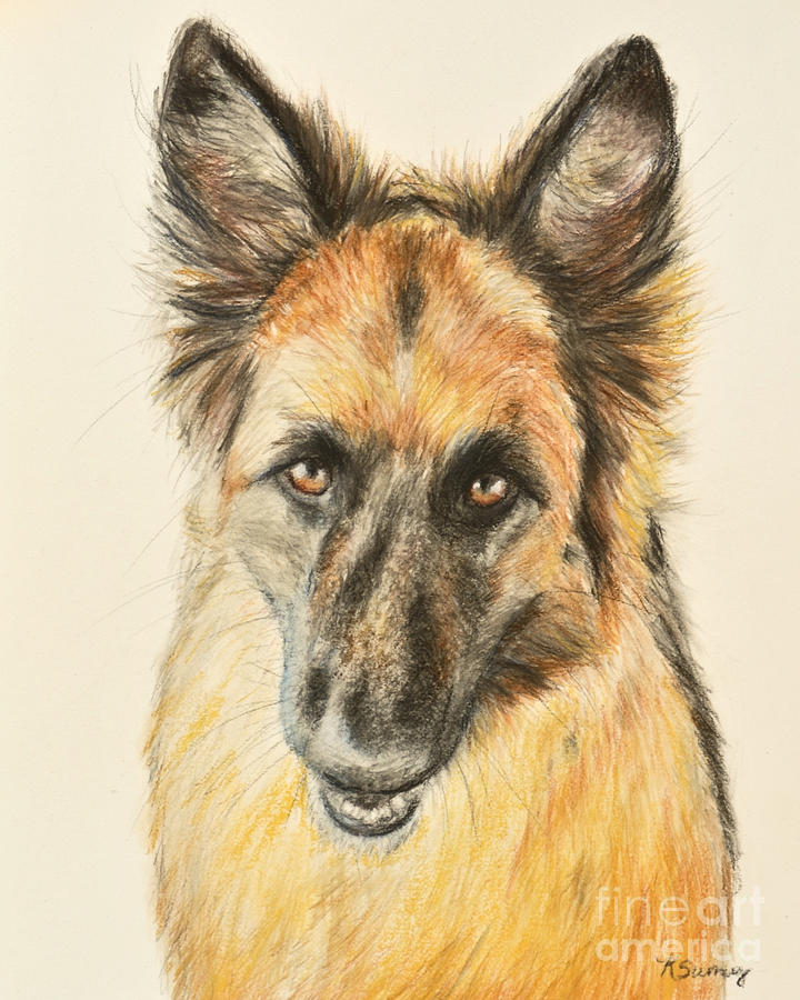 German shepherd painting painting of a german shepherd by kate