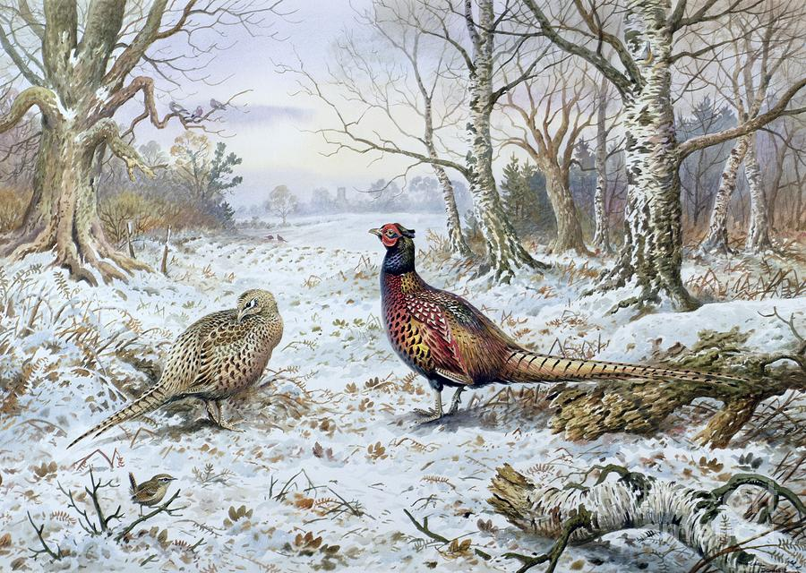 Game Bird; Snow; Woodland; Perdrix; Faisan; Troglodyte; Pheasant; Pheasants; Tree; Trees; Bird; Animals Painting - Pair Of Pheasants With A Wren by Carl Donner