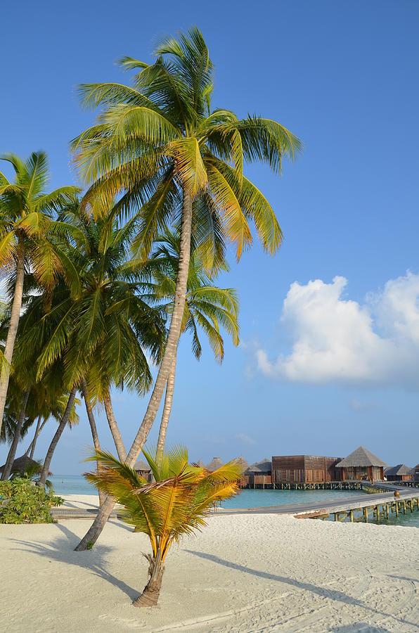 Tropical Paradise Photograph - Palm Paradise by Corinne Rhode