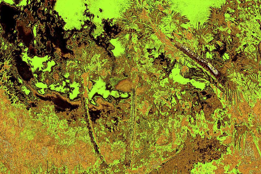 Palm Scene 22 Photograph