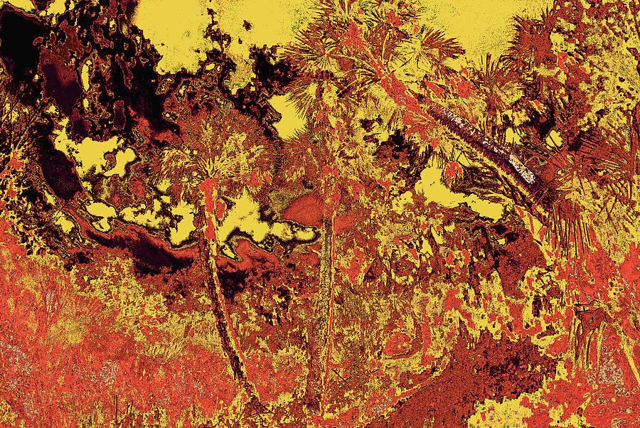 Palm Scene 23 Photograph
