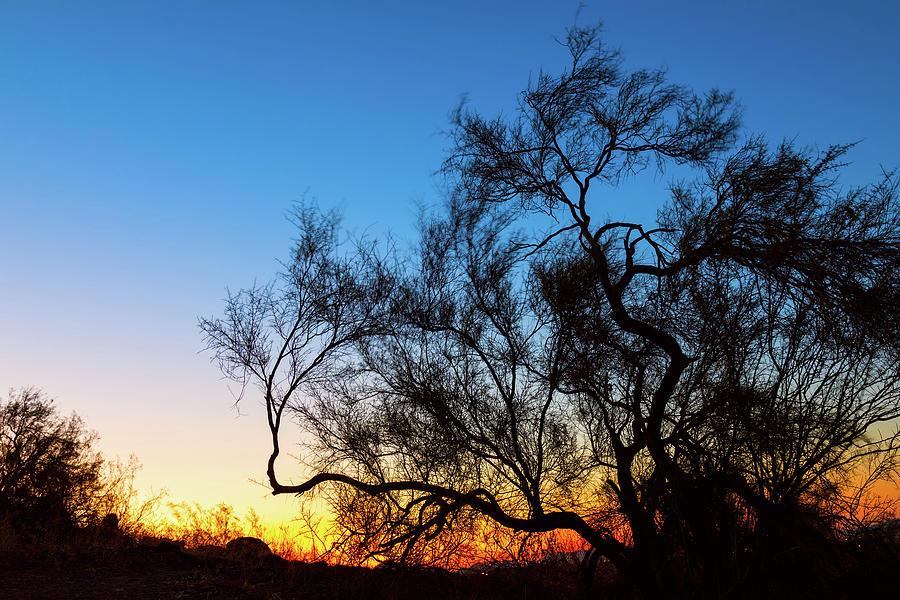 Palo Verde Tree Silhouette Sunrise Photograph