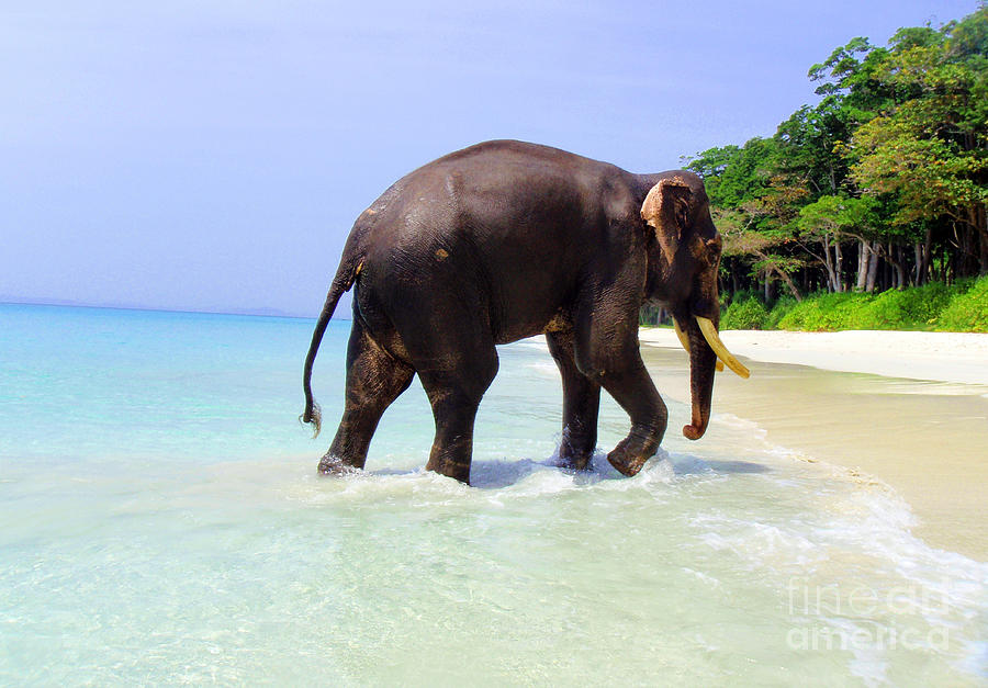 Elephant On Beach Photograph - Paradise Found by Jacqueline Russell