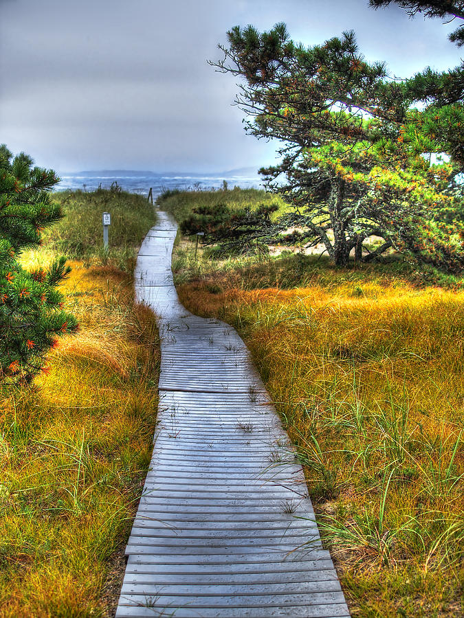Maine Photograph - Path To Bliss by Tammy Wetzel