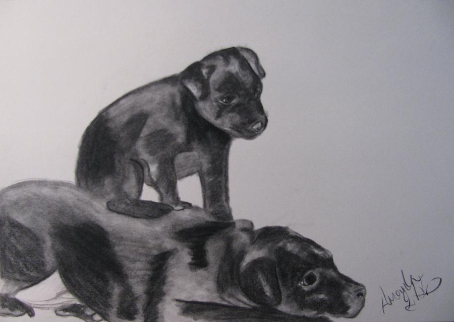 Puppies Drawing - Patterdales by Amanda Burek