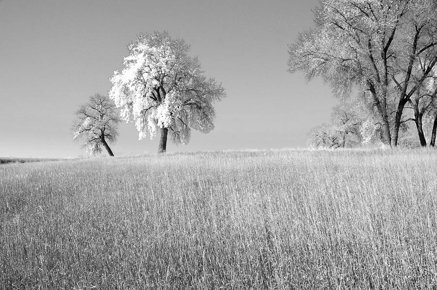 Fine Art Tree In Field Photography. Fine Art Tree Greating Cards. Black And White Greeting Cards. Fine Wall Art Photography. Wall Art Greeting Cards. Field Photography. Tree Pictures. Pictures Of Trees  Photograph - Peaceful by James Steele