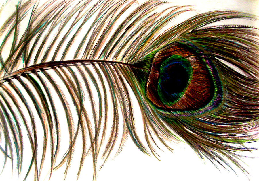 Peacock feather pencil drawing