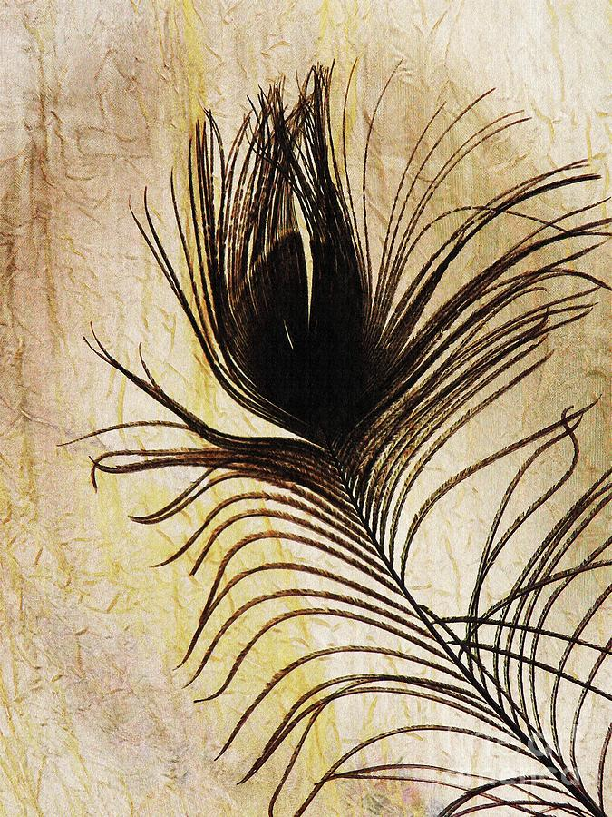 Peacock Photograph - Peacock Feather Silhouette by Sarah Loft