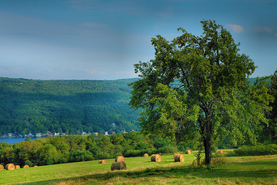 Hay Photograph - Pear Tree And Hayfield by Steven Ainsworth