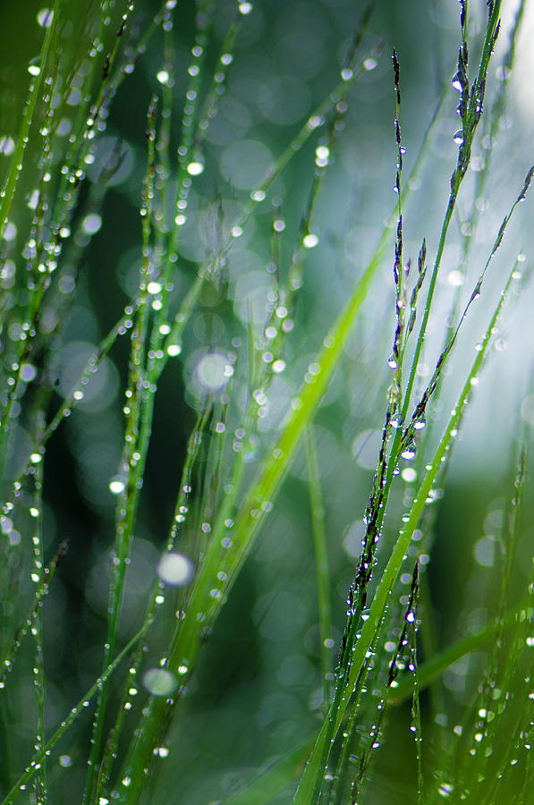Pearls Of Dew Photograph