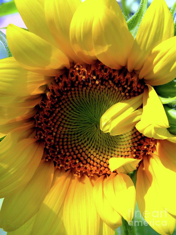 Sunflower Photograph - Peek-a-boo by Christine Belt