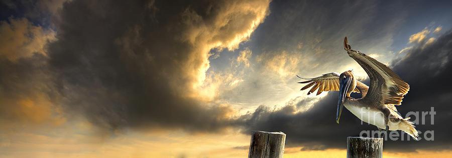 Bird Photograph - Pelican Evening by Meirion Matthias