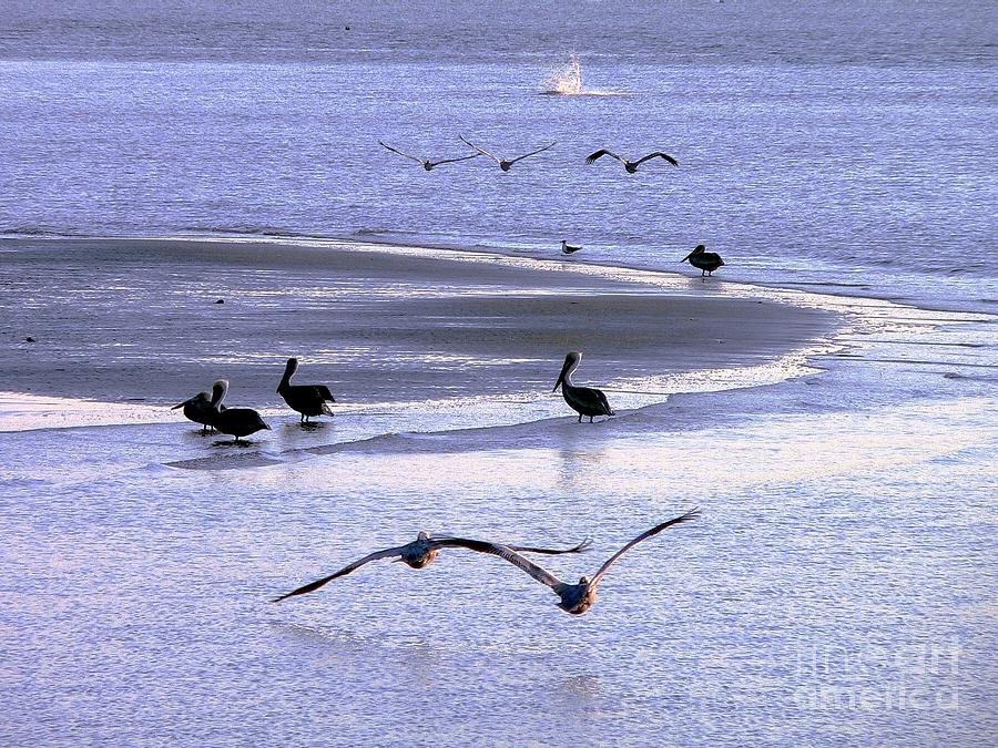 Nature Photograph - Pelican Island by Al Powell Photography USA