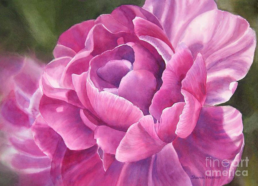 Tulip Painting - Peony Tulip by Sharon Freeman