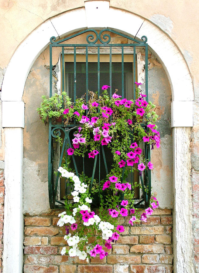 Petunias Through Wrought Iron Photograph