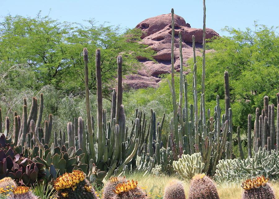 Desert Photograph - Phoenix Botanical Garden by Carol Groenen