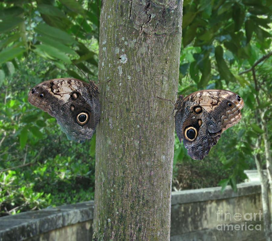 Photography Of Butterfly Symmetry Photograph