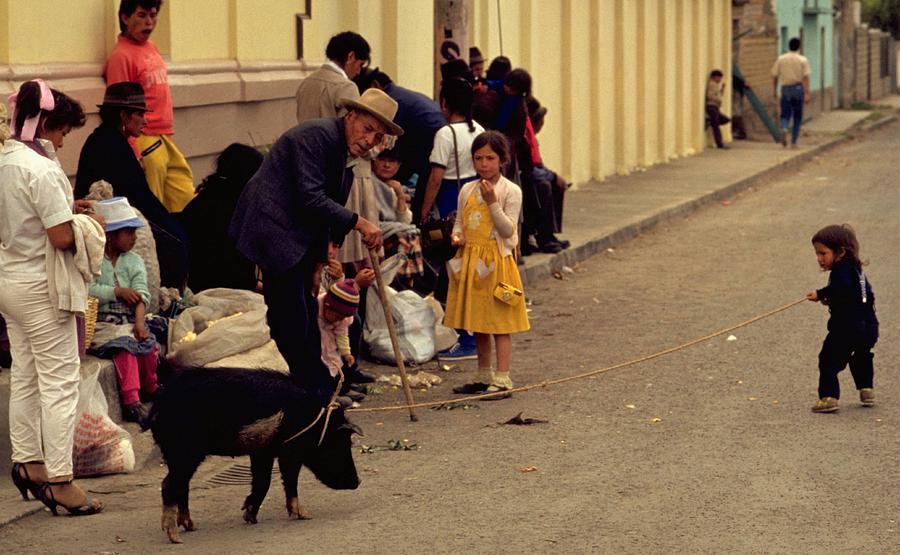 Piggy Went To Market Photograph
