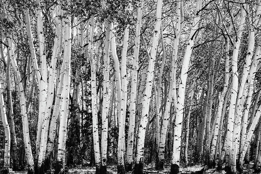 Pillars Of The Wilderness Photograph
