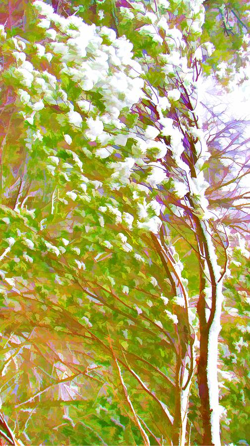 Beauty Painting - Pine Tree Covered With Snow by Lanjee Chee