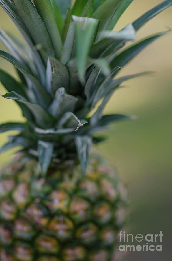 Pineapple Swirl Photograph