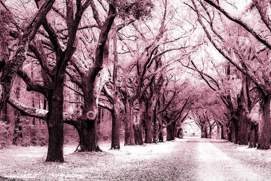 Pink Fantasy Photograph
