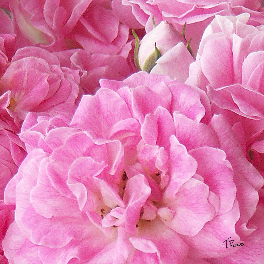 Rose Digital Art - Pink by Tom Romeo