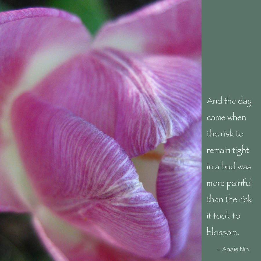 Tulip Photograph - Pink Tulip With Anais Nin Quote by Heidi Hermes