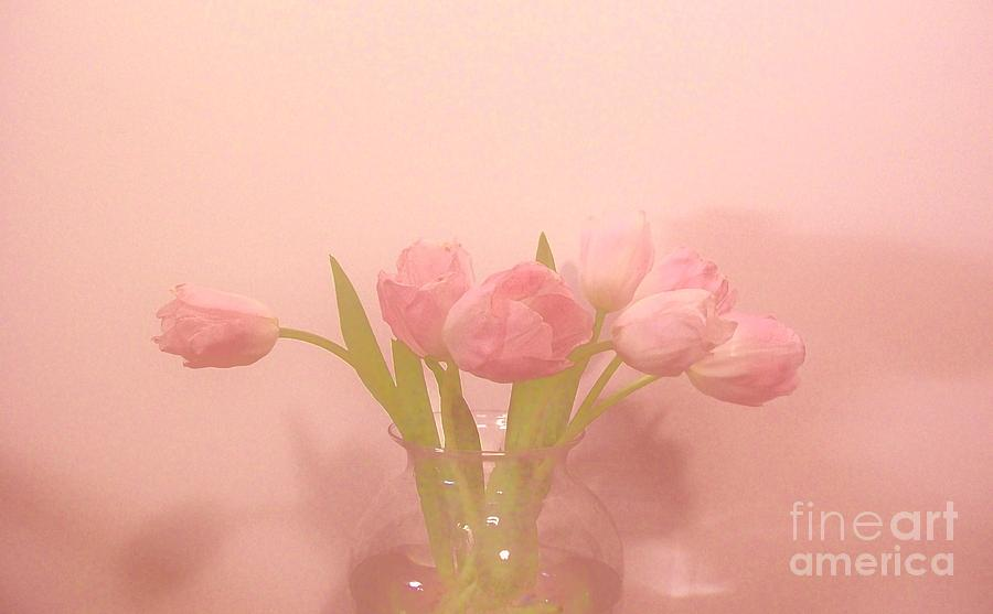 Photo Photograph - Pink Tulips On Pink by Marsha Heiken